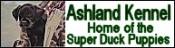 ASHLAND KENNEL