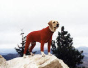 Artic Fleece Dog Vest