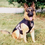 Police K9 Unit vest for dog protection and identification. This vest is for law enforcement agencies only.